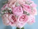 Bridesmaid bouquet or peonies, roses and silver senecio foliage