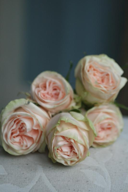 Garden roses Edinburgh