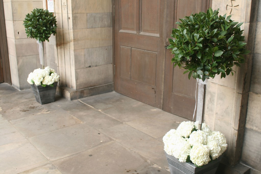 Our large bay trees are available to hire for your wedding or event