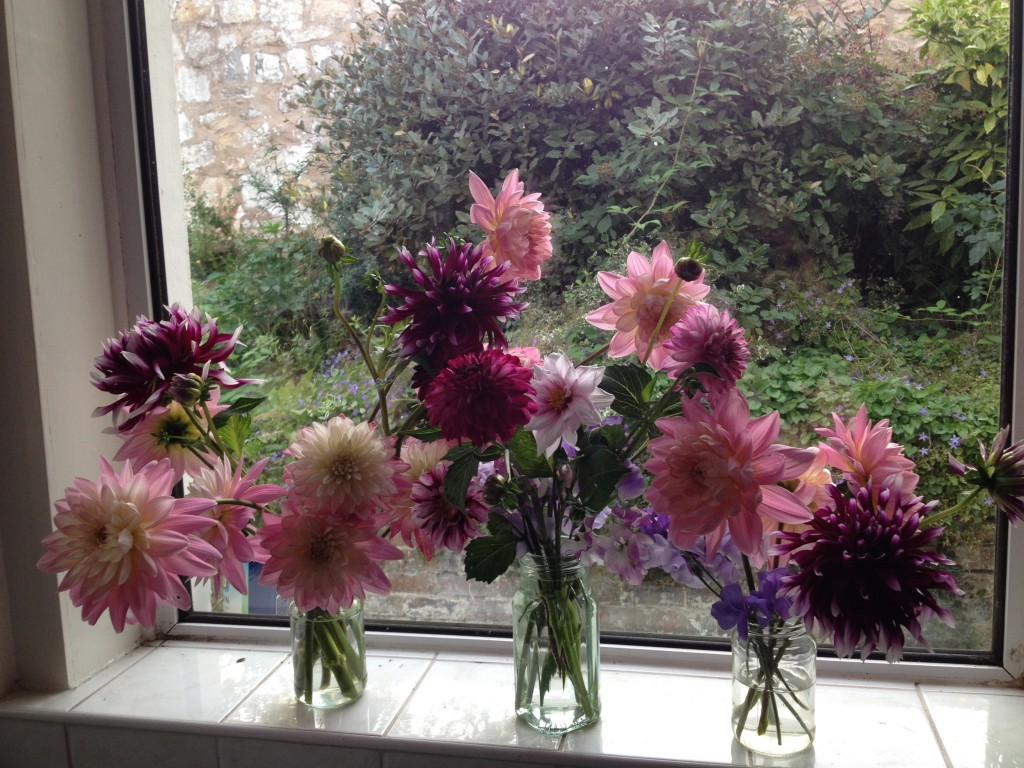 Dahlia grower Musselburgh